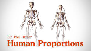 Human Proportions Chart Human Figure Proportions Poster Richer Hale And Loomis