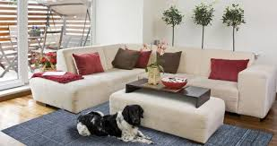 the ultimate guide for pets and carpets rugs cleaning pet odors and sns for
