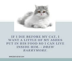 Loss Of A Cat Quotes Custom Cat Loss Quotes On QuotesTopics