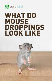 Pest Dropping Identification Chart What Do Mouse Droppings Look Like How To Get Rid Of Mice