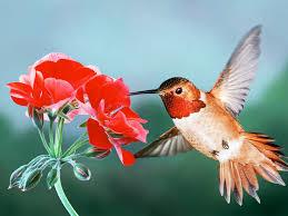 hummingbird bird wallpaper hd wallpapers 1024x768