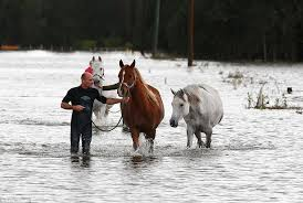 steve spowart spent five hours helping to rescue the horses from the farm in maitland