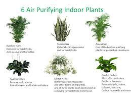 Bonus: plants air home eco