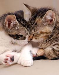 cute puppies and kittens kissing. Brilliant Puppies Cute Puppies And Kittens Kissing  Cute Kitten Kisses Throughout And E