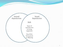 Venn Diagram Of Asexual And Sexual Reproduction Asexual And Sexual Reproduction Venn Diagram Magdalene