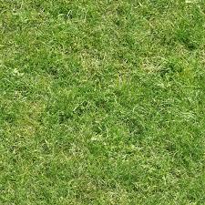 tall grass texture seamless. Seamless Lawn Texture Containing Consistent, Long Green Grass. Tall Grass O