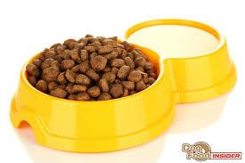 holistic dog food