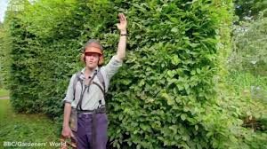 Top tips YOU need to remember when trimming your garden\u0027s hedges ...