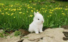 Cute Bunny Wallpapers - Top Free Cute ...