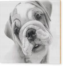bulldog puppy drawing. Unique Puppy Rex A Bulldog Puppy Wood Print By Alexandra Riley Inside Drawing P