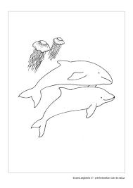 Zeg Kleine Dolfijn Prentenboek Voor Peuters En Kleuters