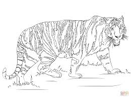 Small Picture Walking Tiger coloring page Free Printable Coloring Pages
