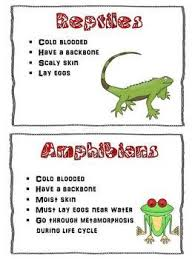 Reptile Classification Worksheet   Have Fun Teaching moreover 195 best Home School images on Pinterest   School  1st grade further Snake Activities as well Animal Worksheets   Page 2 of 4   Have Fun Teaching in addition Reptile Printouts   EnchantedLearning in addition 27 best Reptiles and  hibians images on Pinterest   Reptiles and also Snake Activities   Lifecycle of a Snake Worksheet furthermore There are thousands of reptiles  Ill show some to you  Your mother additionally  also 1299 best ΜΑΘΗΜΑΤΙΚΑ images on Pinterest   Math addition additionally . on reptile worksheets for preschool writing