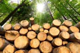 Lacera To Consider Making Ag And Timber Investments Agri
