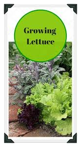 Small Picture 173 best Vegetable Garden Design Tips DIY images on Pinterest