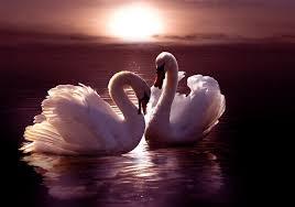 Image result for романтическая любовь