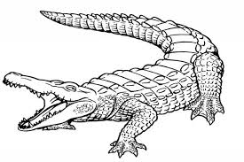 Small Picture Top 79 Alligator Coloring Pages Tiny Coloring Page