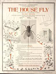List Of Common Household Pests Wikipedia