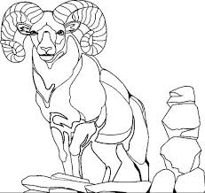 Small Picture baby goats white goat coloring page billy goat coloring page