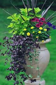 tricks for beautiful garden containers
