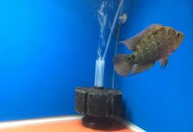 Aquarium Design For Flowerhorn Best Filter For Flowerhorn Tank Flowerhorn