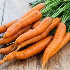 garden seed. 1/4 Pound Of Danvers Carrot Seed- Bulk Garden Seed