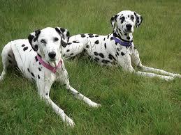 Γιατί στους σκύλους ερεθίζεται το δέρμα των  σκύλων πολύ εύκολα;