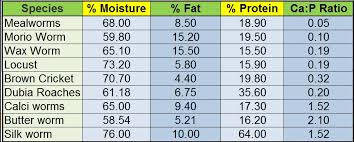 Feeder Insect Nutritional Value Chart Comparison Of Common Feeders Bearded Dragon Org