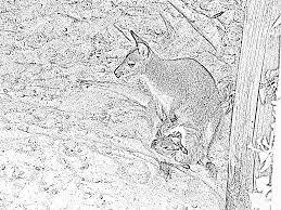 Coloriage Kangourou Son Bebe Imprimer Pour Les Enfants Dessin