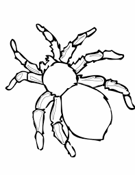 Small Picture Pages Free Page Spider For Kids And All Ages Coloring Spider