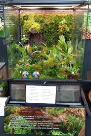 day orchid decor: terrarium the gardengoer a day at the london orchid show wow