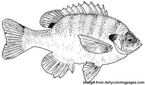 Small Picture Fish Coloring Pages Realistic Coloring Pages