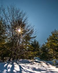 20170216 17 a couple days of sunshine chasing sparkles in the snow leica does a good job too on the fz1000