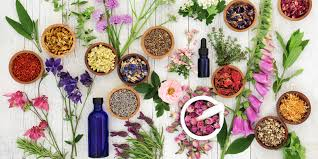 The Power of Herbal Remedies: 10 Herbs You Should Know | Savvy Rest