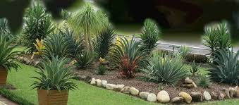 Small Picture Yucca Agave Plants Landscaping Garden Design Ideas Succulents