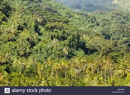 Tropische Wald In Tahaa Gesellschaftsinseln Leeward