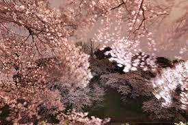 「桜吹雪」の画像検索結果