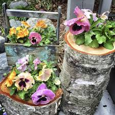 container gardening for beginners. Some Quick Tips For Choosing Container Garden Plants Gardening Beginners N