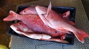 Red Snapper Length Weight Chart Frozen Red Snapper Red