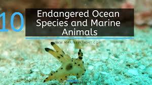 Aquatic Animals Chart 10 Endangered Ocean Species And Marine Animals