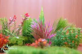 Все об искусственных растениях для <b>аквариума</b>, <b>примеры</b> ...
