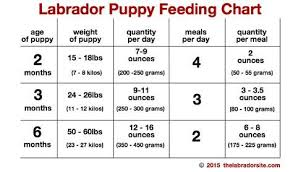 Feeding Your Labrador Puppy How Much Diet Charts And The