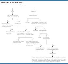 testicular torsion newborn. evaluation testicular torsion newborn ,