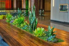 Interior landscaping office Workplace Bachmans Landscaping What Is Interior Landscaping
