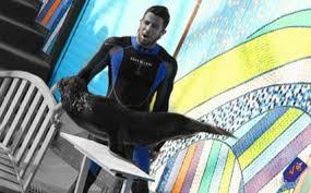 Image result for نمایش حیرت انگیز دلفین ها و شیرهای دریایی در تهران