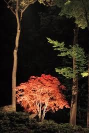 landscape lighting trees. Simple Trees All About Landscape Lighting Inside Trees