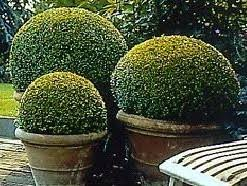 Small Picture Garden designs for box parterres knot gardens hedges and topiary