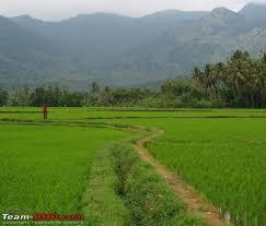 Image result for tamilnadu village  agriculture scene