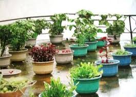 Small Picture Significance of Kitchen Garden in Kerala