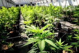 positives of medical marijuana